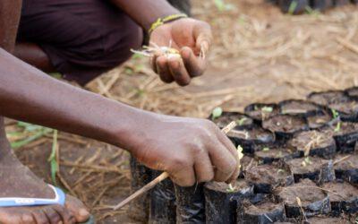 Weerman Reinier van den Berg over Africa Wood Grow