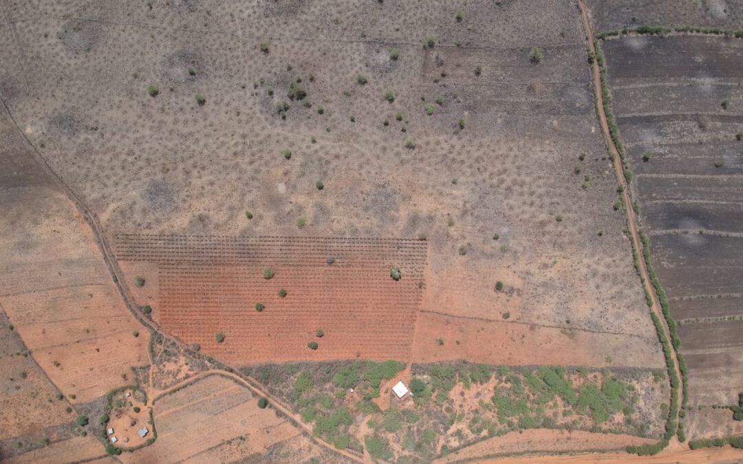 Bomen in Kenia